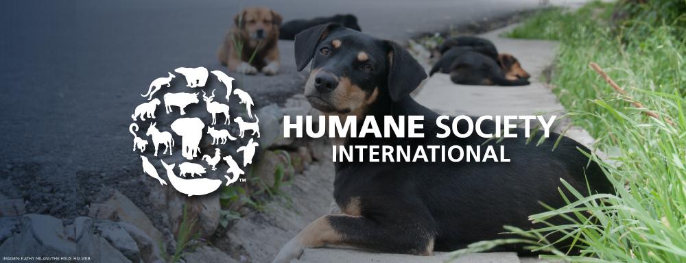 Instituciones, Humane society internacional, Asesorías, Laitjaus, planeación estratégica